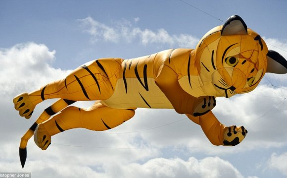 Mid-leap: A tiger takes flight