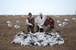 78 Spring snow geese taken over FeatherTek Decoys