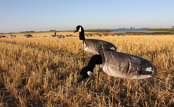 Canada Goose Windsock Decoys