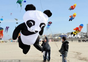 Flying high: A giant panda kite is about to soar into the sky above northern France