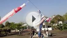"[Japan Culture] ""Koinobori"" Carp-shaped wind socks #3"
