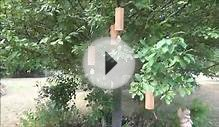 Koshi Wind Chimes - Set of Four demonstration video