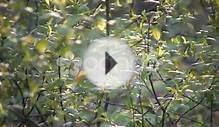Leaves Of A Plant Are Swaying In Wind (High Definition