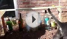 Redneck Wind Chimes with Cat